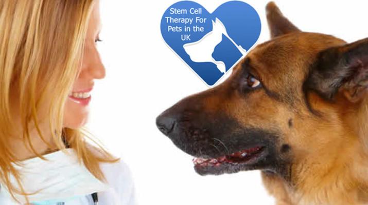 canine-arthritis